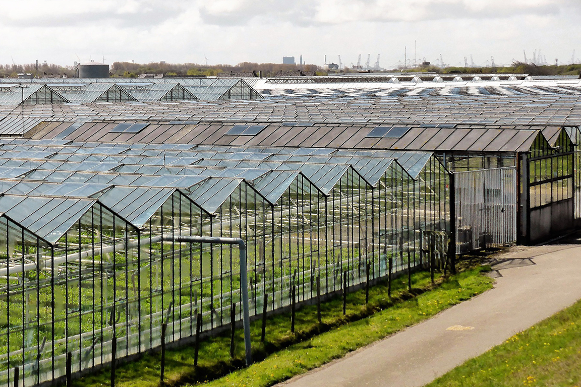 荷兰农业发达的秘密究竟是什么?多种措施做到高产!
