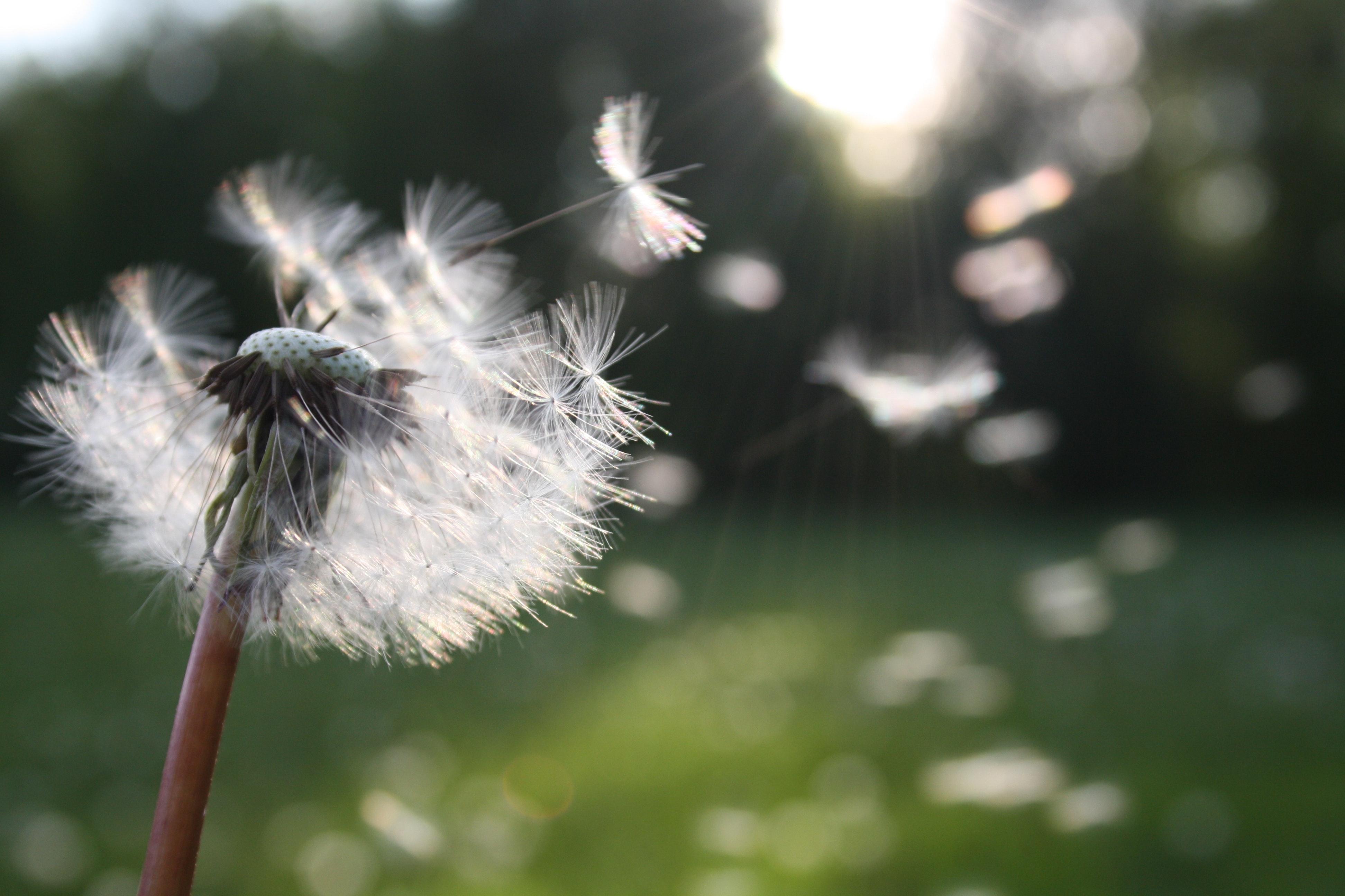 今年,荷兰花粉季比以往来得更早一些