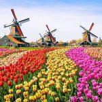 风车日:只要给荷兰一点阳光,游客人数就爆表?