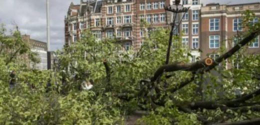 荷兰暴风雨恶劣天气造成的损失惨重,高达数千万欧元