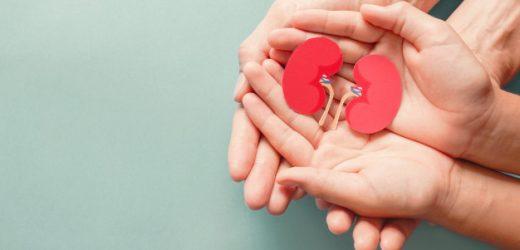 """近半荷兰人登记成为器官捐赠者,更多人说""""不"""""""